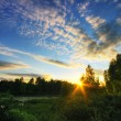 Sunset in summer field  — Stock Photo