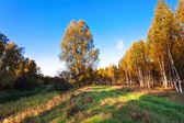 Sunny autumnal field — Stock Photo