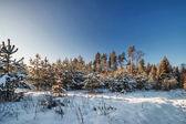 Winter field under blue sky — Stockfoto