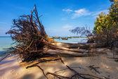 Exotische tropisch strand. — Stockfoto