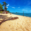 Exotic tropical beach. — Stockfoto