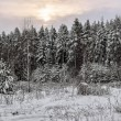 Stock Photo: Gloomy sunset in winter field