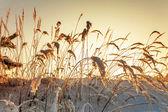 Frozen grass in sunshine — Foto de Stock