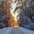 Beautiful winter sunset — Stockfoto