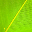 Textures of green palm leaf — Stock Photo