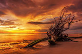 Dead tree trunk on tropical beach — Foto Stock