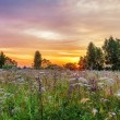 Stock Photo: Sunset in summer field