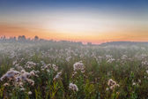 Foggy sunset in summer field — Stock Photo
