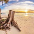 Tree stumps on tropical beach — Stock Photo