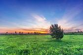 fir-tree in summer field — Stockfoto