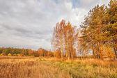 Sunny autumnal field — Stock Photo
