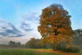 Pad in de herfst park — Stockfoto
