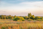 Sunset in summer field  — ストック写真