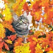 Beautiful kitty sitting on the autumn tree — Stock Photo