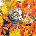 Beautiful kitty sitting on the autumn tree — Stock Photo #14828803