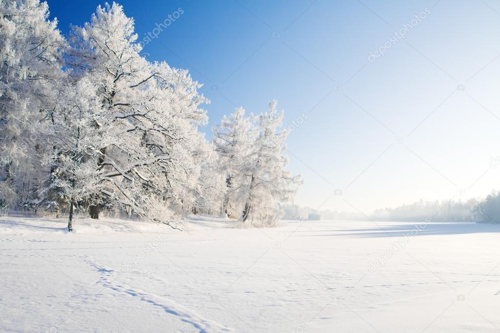 Winter park in snow — Stock Photo #14828873
