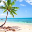 Royalty-Free Stock Photo: Beautiful beach with coconut palm