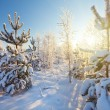 Winter sunset — Stock Photo #19187235