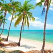 Tropical beach with coconut palm trees. Koh Samui, Thailand — Stock Photo #19187285