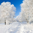 Winter park in snow — Foto Stock