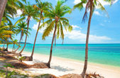 Tropical beach with coconut palm trees. Koh Samui, Thailand — Stock Photo