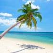 Beach with coconut palm and sea — Stock Photo #21443643