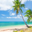Tropical beach with coconut palm — Stock Photo