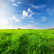 Stock Photo: Green field under blue sky