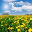 Royalty-Free Stock Photo: Yellow flowers hill under blue cloudy sky