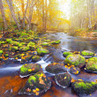 River in autumn forest — Stock Photo #21443879