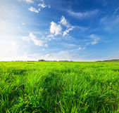 Green field under blue sky — Stock Photo