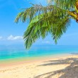 Stock Photo: Beach with coconut palm and sea
