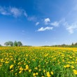 Stock Photo: Yellow flowers hill under blue cloudy sky