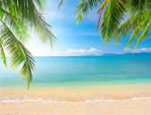 Palm and tropical beach — Stock Photo