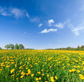 Yellow flowers hill under blue cloudy sky — ストック写真