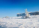зимний парк в снегу — Стоковое фото