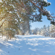Winter park in snow — Stock Photo #34443481