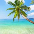 Sea and coconut palm — Foto de Stock