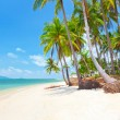 Tropical beach with coconut palm — Stockfoto