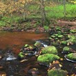 Stock Video: Mountain River In Forest