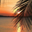 Stock Video: Palm Leaf And Sunset