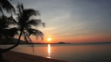 Sunset And Beach With Coconut Palm — ストックビデオ