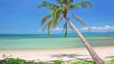 Tropical beach with coconut palm — Stock Video