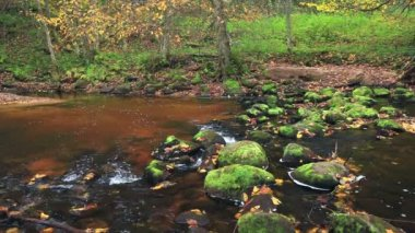 フォレスト内の山の川 — ストックビデオ