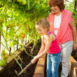 Woman with child grows harvest in the greenhouse — Stock Photo #51366637