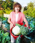 Woman grows harvest in the garden — Stock Photo