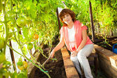 Woman grows harvest in the hothouse — Stock Photo