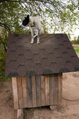 Dog sitting on te roof — Stock fotografie