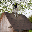 Dog sitting on te roof - Stock Photo