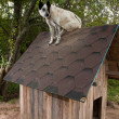Dog sitting on te roof — Stock Photo